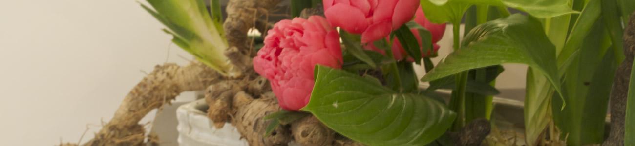 Corsi di Ikebana a Bologna: Ohara Study Group al Garden Club Camilla Malvasia Bologna III