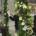 Corso Floristry Livello 2